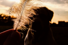 soffione cane tramonto