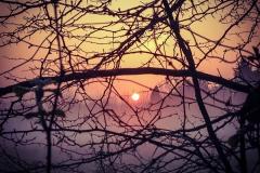 tramonto alberi