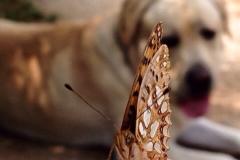 farfalla cane
