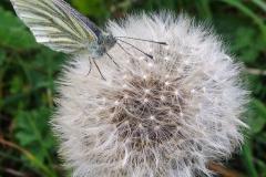 insetto su soffione