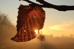 foglia autunno tramonto