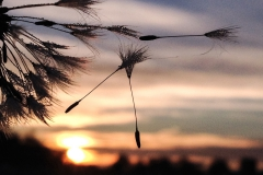 tramonto soffioni