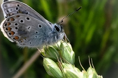 farfalla posata