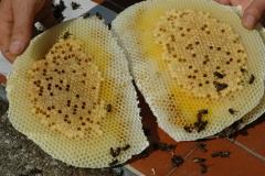 Rimozione nido di vespe e calabroni