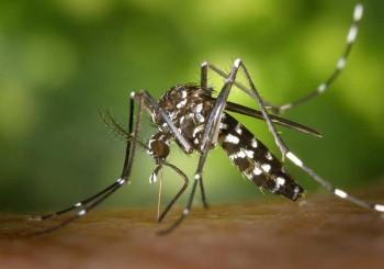 La zanzara di Zika che spaventa l'Europa