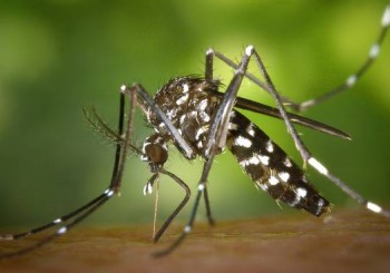 disinfestazione zanzare - Kaptura