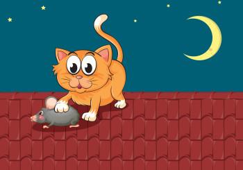 Gatto e topo_Kaptura disinfestazione